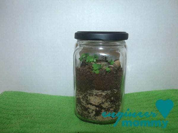 DIY easy terrarium