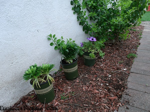 5 Spring Gardening Tips with Monrovia Plants