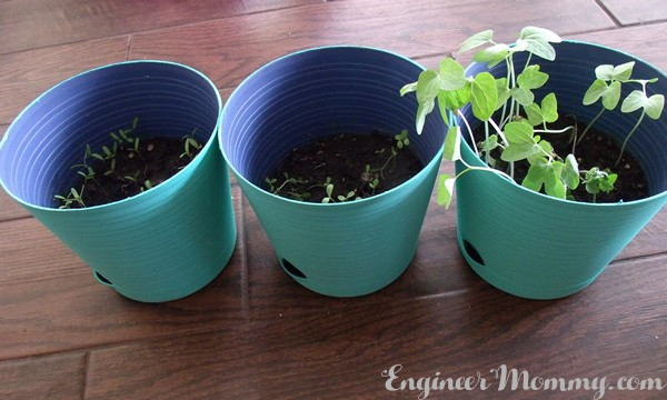 Easy Update: Dollar Store Planters