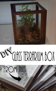 DIY Glass Terrarium Box