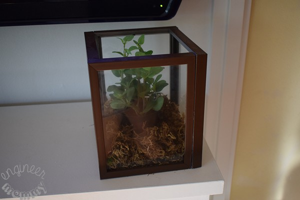Glass Terrarium Box