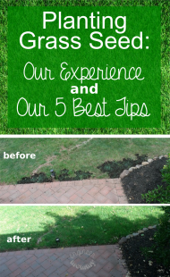 Planting Grass Seed: Our Experience & 5 Best Tips