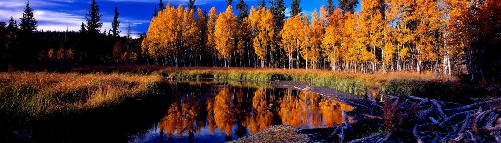 cedar-mountain-cp-postcard-kcot-x3