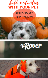 Pumpkin Flavored Treats for Dogs