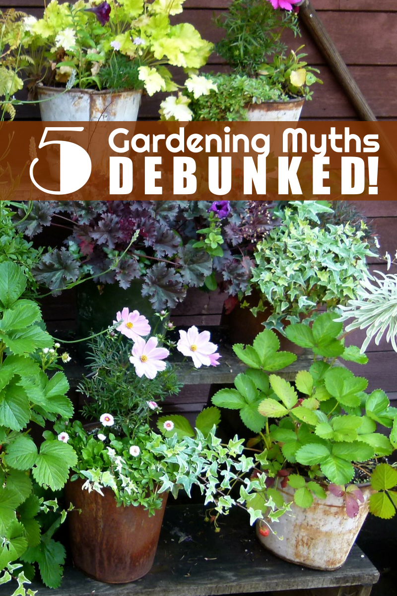 5 Backyard Gardening Myths… DEBUNKED!