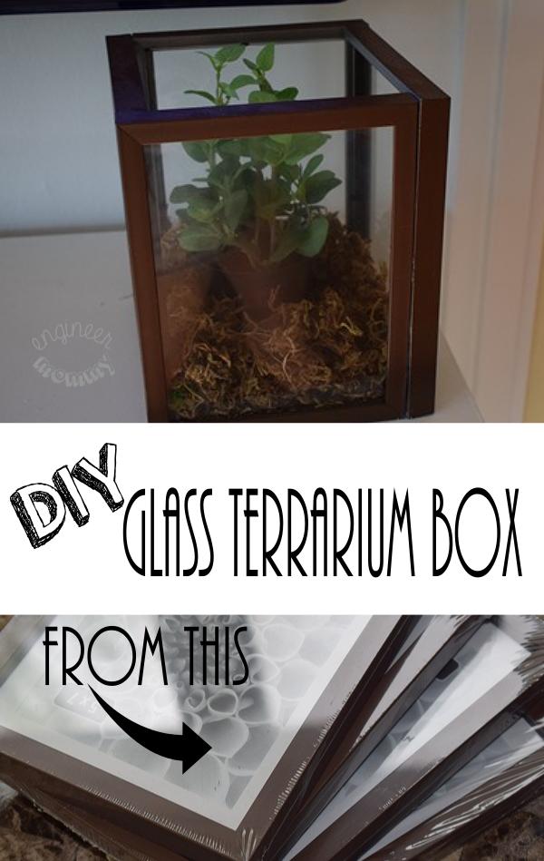 DIY Glass Terrarium Box